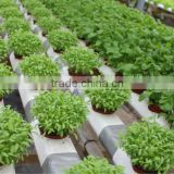 hydroponic NFT growing system greenhouse
