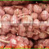 (NEW) 2015 fresh peeled garlic new corp for sale