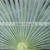 fan leaves, woven palm leaf