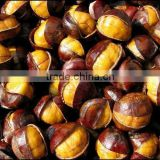 sweet top quality frozen ringent chestnut with shell