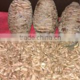 New cedar tree seeds in wholesale