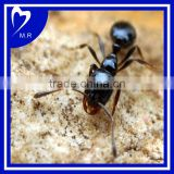High Quality Black Ant Extract (ISO9001,KOSHER,HALAL,FDA)