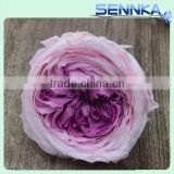wholesale valentine's day gifts purple color preserved roses flower austin rose dried flowers