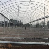 Galvanized steel pipe frame agriculture single wide span greenhouse