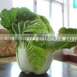 GOOD QUALITY FRESH CHINESE CABBAGE