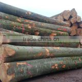german beech logs