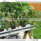 Hydroponics System for market gardening