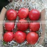 Farm Fresh Pomegranate Supplier in India