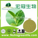 Green tea extract powder / L-Theanine