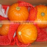 2013 fresh big pumpkin For sale