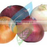 Exporters, Producer, Suppliers of Fresh Onions/Red Onions