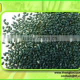 Export quality sesame seeds from Vietnam