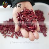 Dark red kidney bean big size 200-220pcs/100g Rajma for canned