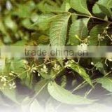 100% pure & natural Neem Oil - Agrochemicals