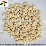 chopped blanched peanuts/shandong roasted java blanched peanut/chinese new crop blanched peanut