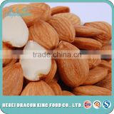 wholesale price dried sweet apricot seeds, raw apricot kernel nuts bulk buying from China factory