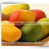 Mango pulp supplier from India