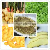ginger extract gingerols powder/ginger root extract 5% gingerol/ginger root extract manufacture