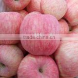 factory of fuji apple suplier s