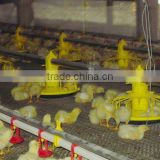 automatic broiler chicken feeding machine/chicken breeding system/chicken feeding equipment