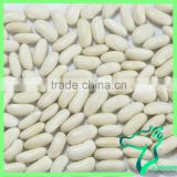 Long White Kidney Beans 2016 Crop Kidney Beans For Weight Loss