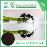 Health-care supplement China polyrhachis ant extract for anti-aging