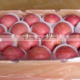 2015 Wholesale High Quality fresh red apple