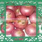 Fresh Onion Crop - Excellent Red Mesh Bag Packing