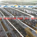 quail laying cages for sale from China