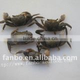 cooked crab as good gift