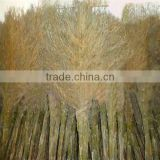 WYC-bamboo broom Private customed grass bamboo brooms and grass bamboo broom raw material Big Manufacturer and supplier