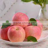 20 KG/CTN 1155 CTNS/FCL (40 FT RH)High Quality Chinese Fresh Red Apple