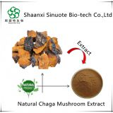 New Natural Health Supplement Chaga Extract Powder