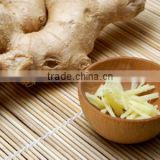 Hot Sale Product of Natural Ginger Oil