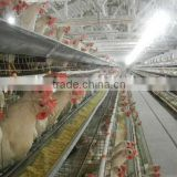 battery hen layer cage chicken feeding system