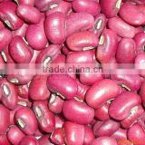Red cowpea beans 2016 good quality