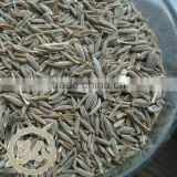 new crops, origin xinjiang China,price for cumin seeds                                                                         Quality Choice