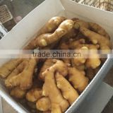 china supplier dried ginger for thailand