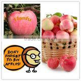 fresh fruit from China high quality and good price red big sweet crisp hanfu fresh apple