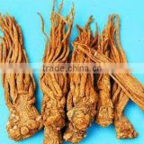 100% pure natural Chinese Angelica herbal oil