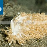 Aquarium supplies crystal salt coral reef sea coral