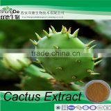 Medicine grade Hoodia Cactus Extract for slimming