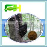 Best Quality Natural Chaga Mushroom Extract