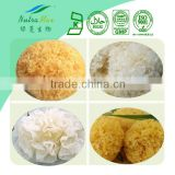 Natural Tremella Fuciformis Extract/White Fungus Extract Polysaccharides 40% 50%