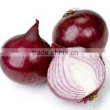 Red onion Exporter In India