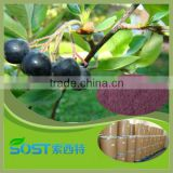 alibaba china free sample acai powder bulk