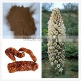 100% Natural Cistanche tubulosa extract Acteoside 18% 25% 38%