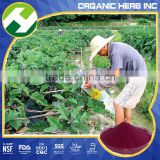 Black radish extract powder anthocyanin / radish seed p.e.