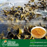 Factory 100% natural Seaweed Extract powder Fucoidan 85%, Fucoxanthin free sample Kelp Extract Fucoxanthin