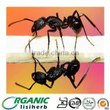 Pure natural Men`s health black polyrachis ant extract powder